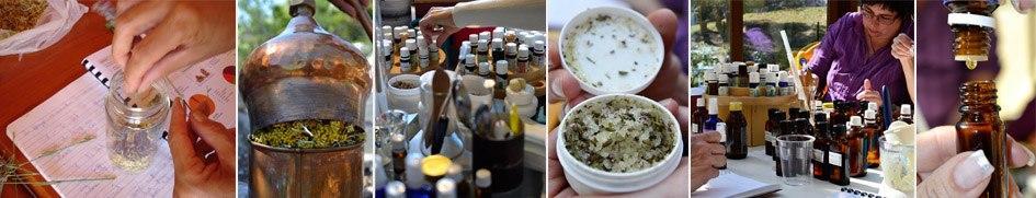 Tečaj aromaterapije - novice