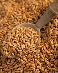 Recepti iz pirine moke sodijo med najboljše recepte pirinih izdelkov.