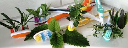 DOmača zobna pasta in barvitost raznovrstnih zelišč